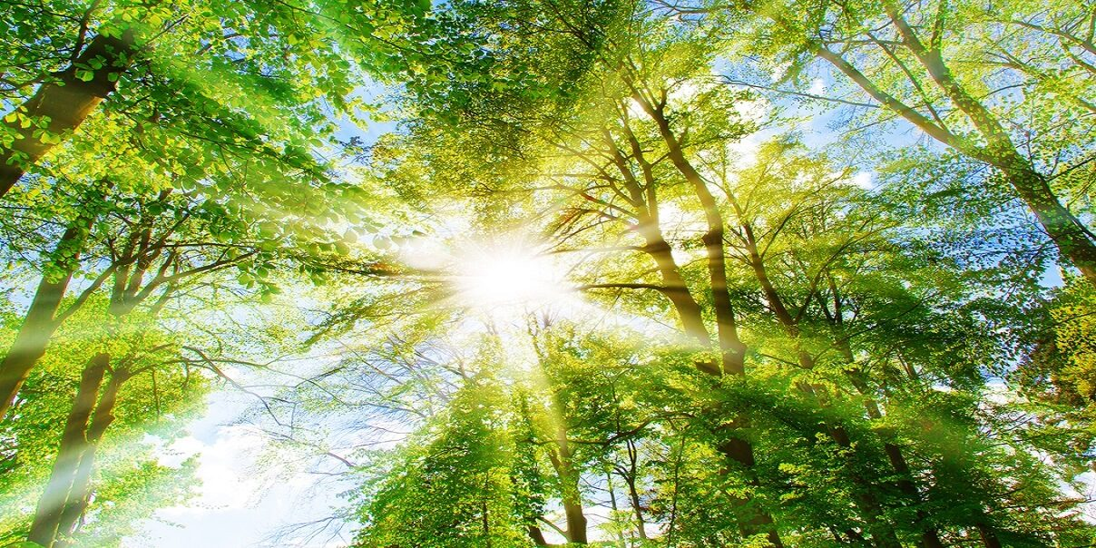 Bright sun in the forest; Shutterstock ID 284509700; Purchase Order: 436602